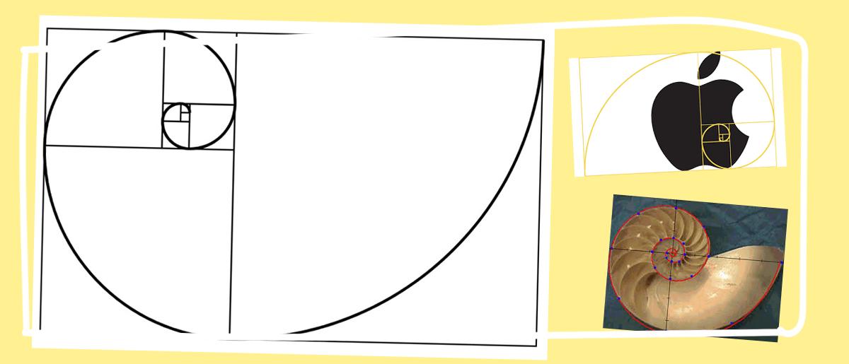 zlota proporcja